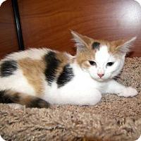 Adopt A Pet :: Cheddar - Hamilton, ON