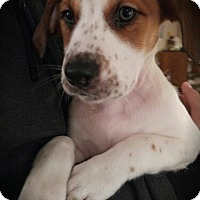 Adopt A Pet :: Archer - adoption pending - Kenner, LA