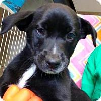Adopt A Pet :: Rezi - Mission, KS