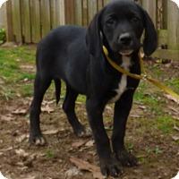 Adopt A Pet :: Pixie - Newburgh, NY