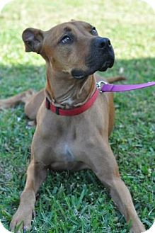 Hound (Unknown Type) Mix Dog for adoption in Cocoa, Florida - Daisy (Barkingham Palace)