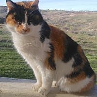 Adopt A Pet :: Patchouli - Buhl, ID