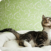 Adopt A Pet :: Chowder - Red Wing, MN