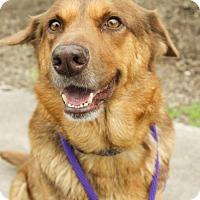 Adopt A Pet :: Ava - Plano, TX