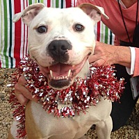 Adopt A Pet :: SCARLET - Tinton Falls, NJ