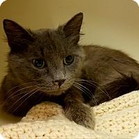 Adopt A Pet :: Fluffers - Elyria, OH