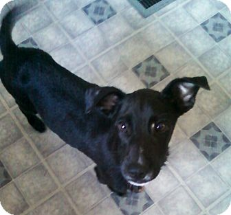 Hound (Unknown Type) Mix Puppy for adoption in Homer, New York - Polo