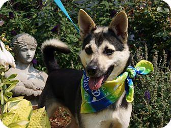 Husky/German Shepherd Dog Mix Dog for adoption in Princeton, Kentucky - Hunter