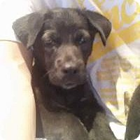 Adopt A Pet :: Mack - Marlton, NJ