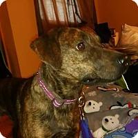 Adopt A Pet :: Murphy - Harrison, AR