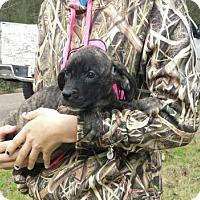 Adopt A Pet :: Laura - Livingston, TX