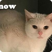 Adopt A Pet :: Snowball - Philadelphia, PA