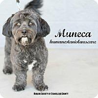 Adopt A Pet :: MUNECA - Modesto, CA