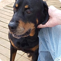 Rottweiler Dog for adoption in Dallas, Georgia - Taffy