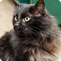 Adopt A Pet :: Dimitri - Seattle c/o Kingston 98346/ Washington State, WA
