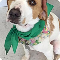 Adopt A Pet :: Parker *Adopt or Foster* - Fairfax, VA