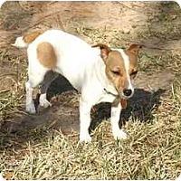 Adopt A Pet :: Cinnamon in Houston - Houston, TX