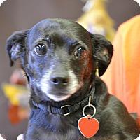 Adopt A Pet :: JEROME - Higley, AZ
