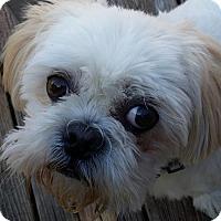 Adopt A Pet :: Corey Turner - Urbana, OH