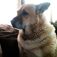 Adopt A Pet :: *URGENT* KONA & KAHLUA* - Van Nuys, CA