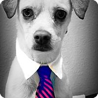 Adopt A Pet :: Kato - Casa Grande, AZ