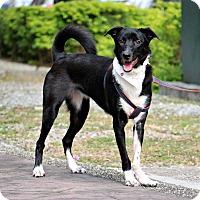 Adopt A Pet :: Polly - San Mateo, CA