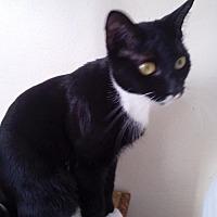 Adopt A Pet :: Damiana - St. Cloud, FL
