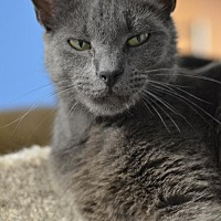 Adopt A Pet :: Natalia 14161 - Atlanta, GA