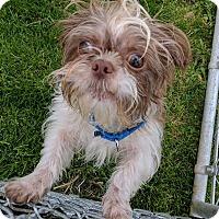 Adopt A Pet :: Wade - Lisbon, OH