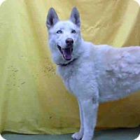 Adopt A Pet :: URGENT on 5/29@DEVORE San Bern - San Bernardino, CA