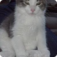 Adopt A Pet :: Destiny - Sterling Hgts, MI