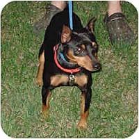 Adopt A Pet :: Scrappy - Springvale, ME