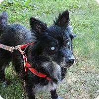 Adopt A Pet :: Marjie - Madison, WI