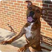 Adopt A Pet :: Brooks - Little River, SC