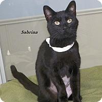 Adopt A Pet :: Sabrina - Dover, OH