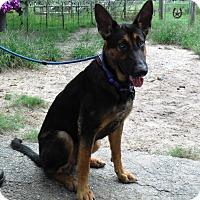 Adopt A Pet :: FRANKIE - SAN ANTONIO, TX