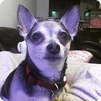 Adopt A Pet :: Max - Gainesville, FL