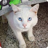 Adopt A Pet :: Hibiscus - Baton Rouge, LA