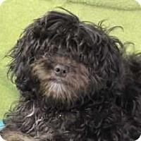 Adopt A Pet :: Millie - Washington, DC