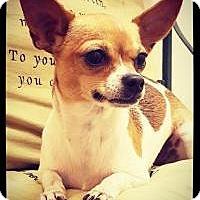 Adopt A Pet :: Meko - Grand Bay, AL