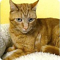 Adopt A Pet :: Beau - Medway, MA