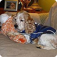 Adopt A Pet :: Jay - Fort Hunter, NY