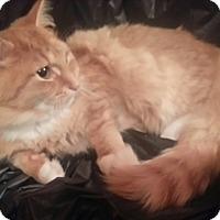 Adopt A Pet :: Valentin - Harrisburg, NC