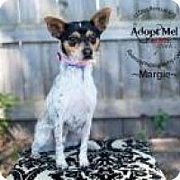 Adopt A Pet :: Margie - Shawnee Mission, KS