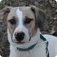 Adopt A Pet :: Maggie - McDonough, GA