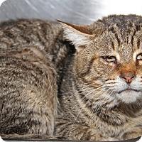Adopt A Pet :: Odin - Marietta, OH