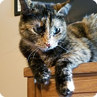 Adopt A Pet :: Tallulah - Chattanooga, TN