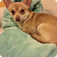 Adopt A Pet :: Pongo - Yreka, CA