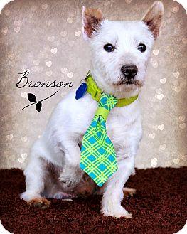 Omaha, NE - Westie, West Highland White Terrier. Meet ...