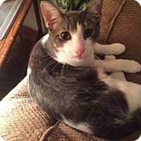 Adopt A Pet :: Ozzy - Friendswood, TX